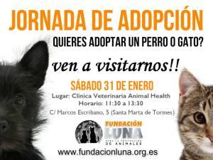 Jornada de adopción en Santa Marta el 31 de enero